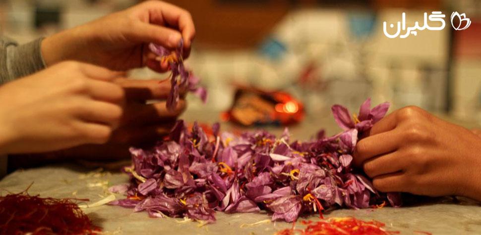طریقه خشک کردن زعفران به صورت سنتی در خانه